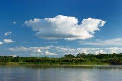 秘鲁Amazonas,亚马孙河横向 免版税库存图片