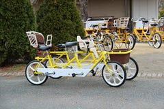 租的纵排自行车在公园 免版税库存照片