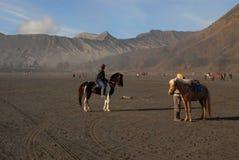 租的马在Bromo山 免版税库存图片