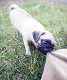 积极的小狗 免版税库存照片