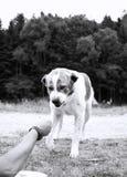 积极的狗 免版税库存图片