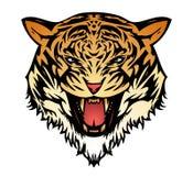 积极的猫老虎向量 免版税图库摄影