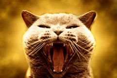 积极的猫 免版税图库摄影