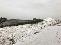 积雪清楚与树 库存图片