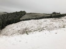 积雪清楚在与森林的山 库存照片