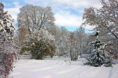 积雪的公园在11月天 免版税库存照片