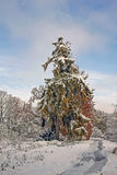 积雪的公园在11月天 库存图片