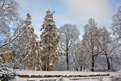 积雪的公园在11月天 库存照片