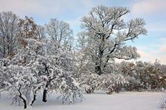 积雪的公园在11月天 免版税库存图片