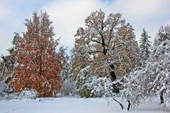 积雪的公园在11月天 免版税图库摄影
