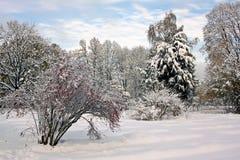 积雪的公园在晴朗的11月天 免版税库存照片