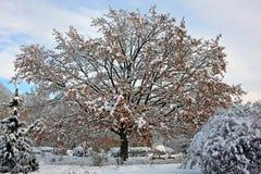 积雪的公园在晴朗的11月天 库存图片