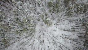 积雪的冬天混杂的森林顶视图的鸟瞰图 股票录像