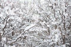 积雪的冬天风景 免版税库存照片