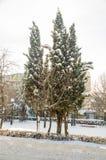 积雪的冷杉木在城市停放波摩莱,保加利亚,冬天2017年 图库摄影