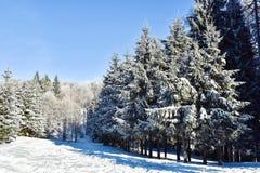 积雪的冷杉森林 免版税库存照片