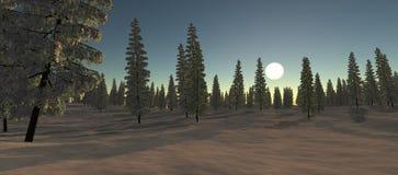 积雪的冷杉看法在冬天 太阳 免版税库存图片