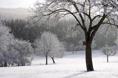 积雪的冷漠的森林 免版税库存照片
