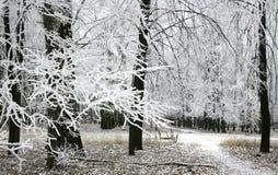 积雪的分支在秋天森林里 免版税图库摄影