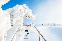 积雪的台阶和树在降雪以后 免版税库存图片