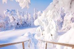 积雪的台阶和树在降雪以后 库存照片
