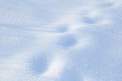 积雪的土地特写镜头冬日 免版税库存照片