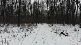 积雪的土路在森林,冬天季节 光滑的飞行在低空 股票录像