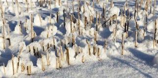 积雪的域 库存图片