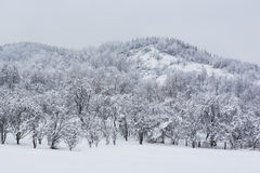 积雪的小山 免版税库存照片