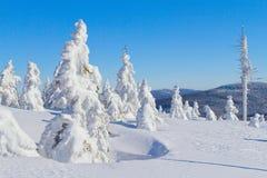 积雪的山和结构树冬天视图  免版税库存图片
