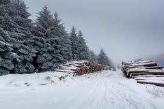 积雪的日志和毛皮结构树 免版税库存图片