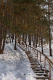 积雪的木楼梯在杉木森林里 免版税库存图片