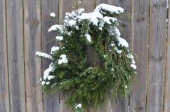 积雪的杉木杜松花圈木篱芭门 库存图片