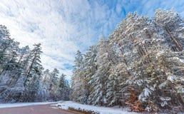 积雪的杉木-沿农村路的美丽的森林 库存图片