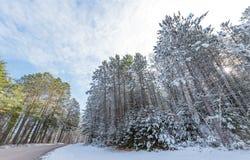 积雪的杉木-沿农村路的美丽的森林 图库摄影