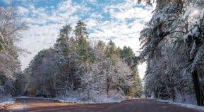 积雪的杉木-沿农村路的美丽的森林 免版税库存图片