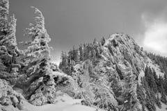 积雪的杉树和山峰黑白风景在一个多云冬日 免版税库存照片
