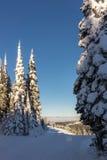 积雪的杉树和滑雪倾斜 免版税库存照片