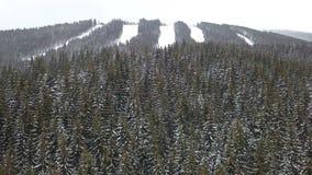 积雪的杉树的鸟瞰图 影视素材