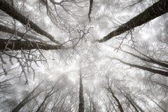 积雪的树上面,积雪的山毛榉 库存照片