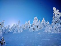 积雪的树上面 免版税库存照片