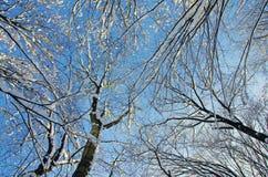 积雪的树上面 库存图片