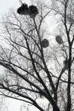 积雪的树冬日 免版税库存照片