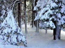 积雪的树和冬天森林道路在Bridgton,缅因12月 2014年埃里克L 约翰逊摄影 库存照片