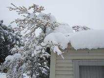 积雪的树和屋顶 库存照片
