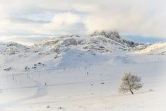 积雪的树和山在一个白色风景在Beitostø 免版税库存照片