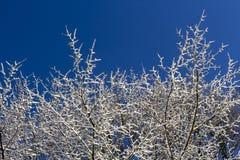 积雪的树和蓝天 免版税库存照片