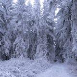 积雪的树和路,冬天风景 图库摄影
