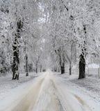 积雪的树和路,冬天风景 库存图片