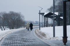 积雪的树和长凳在城市停放 免版税图库摄影